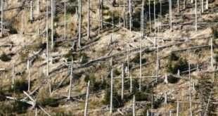 На Байкале ликвидируют стихийную свалку
