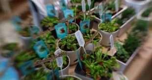 В Москве 17 и 18 апреля состоится городской маркет Growbox